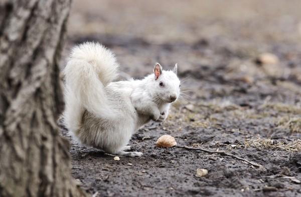 mythical-albino-animals-05-600x393