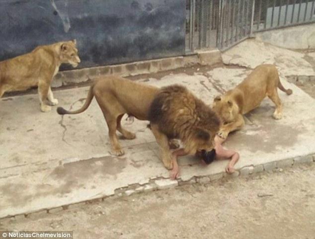liontari zoo 2
