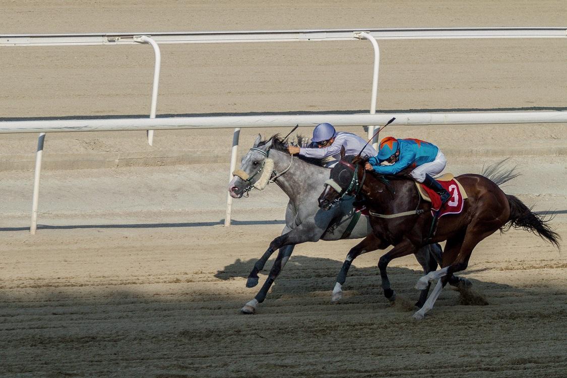 Horse races 3