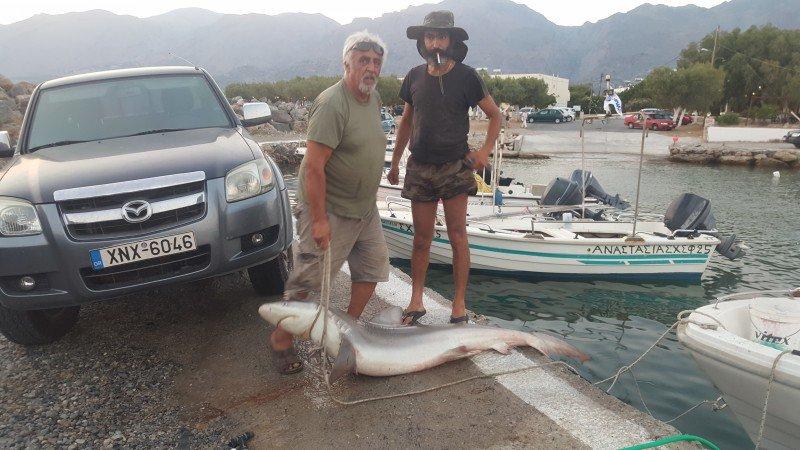 καρχαριας 2