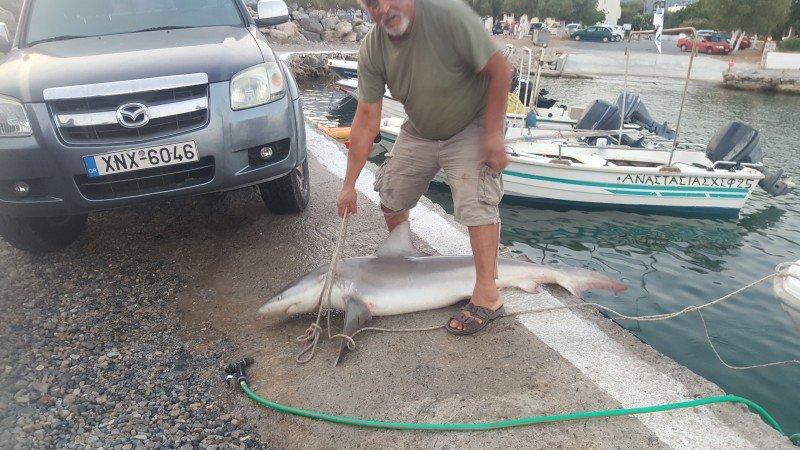 καρχαριας 3