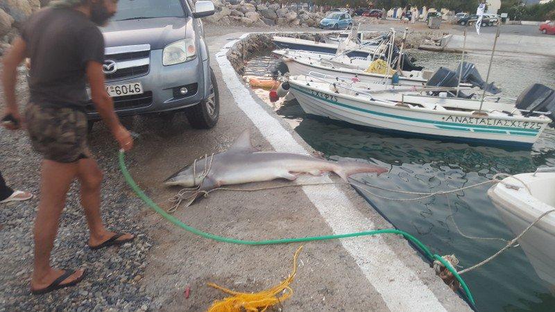 καρχαριασ 4