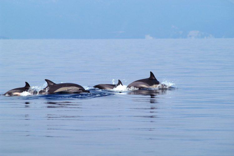 δελφινια 3