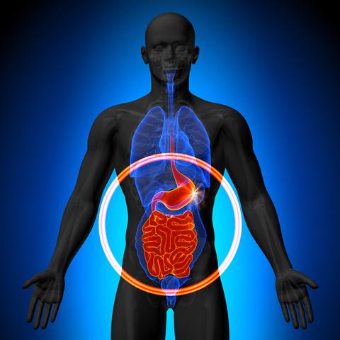 bigstock Stomach Guts Small Intesti 66111244