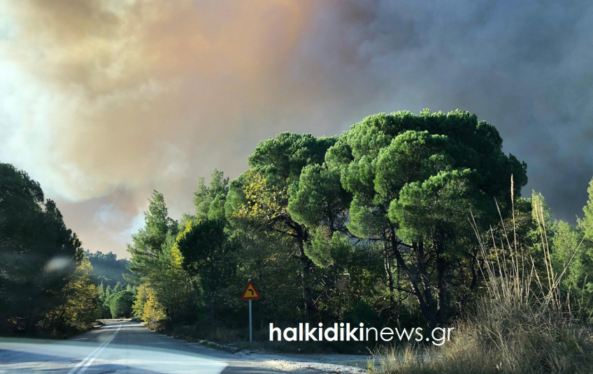 fotia xalkidiki9