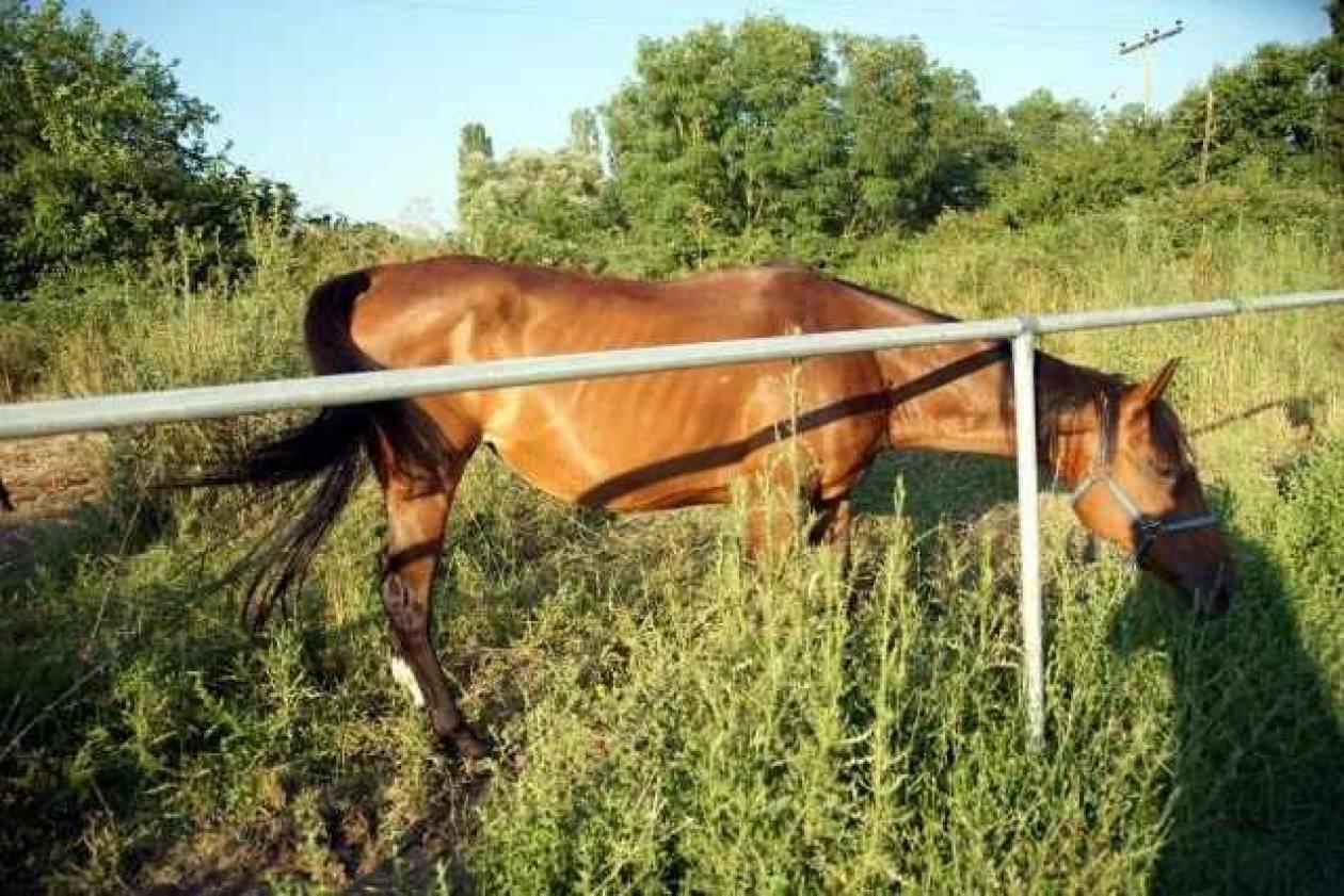 Σήμα κινδύνου εκπέμπουν τα αλογάκια της Ρόδου