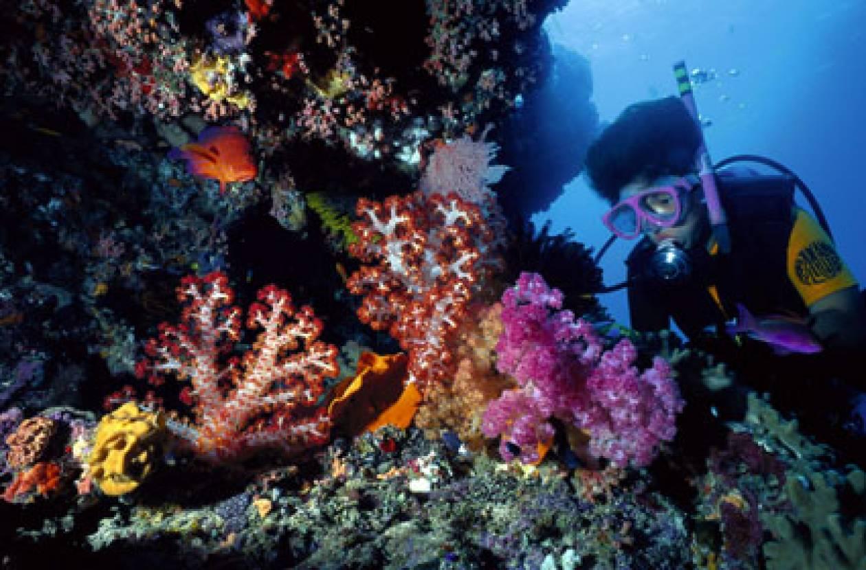 Δεκαετής «ανάρρωση» για τον Μεγάλο Κοραλλιογενή Ύφαλο