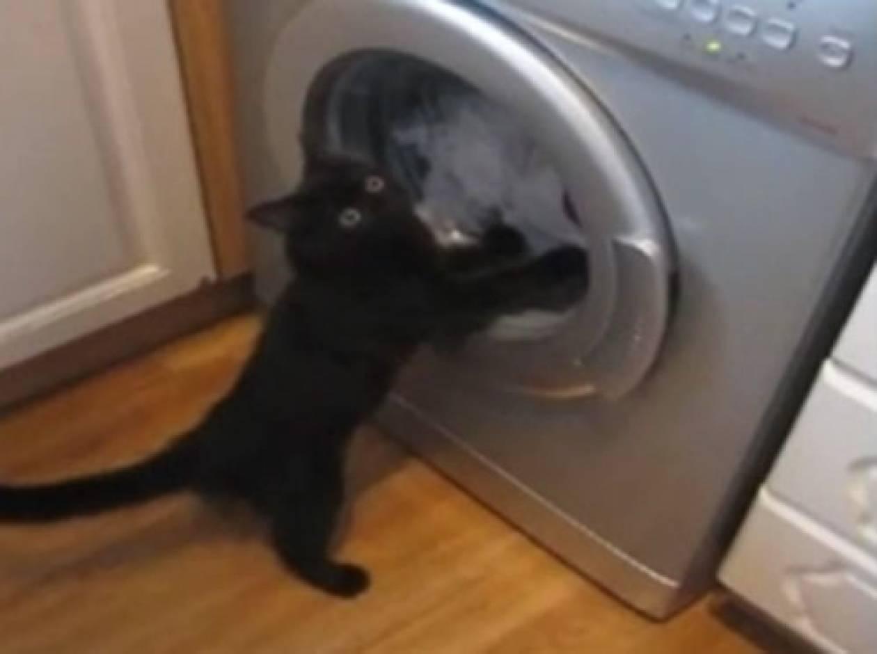 Γάτα VS πλυντηρίου!