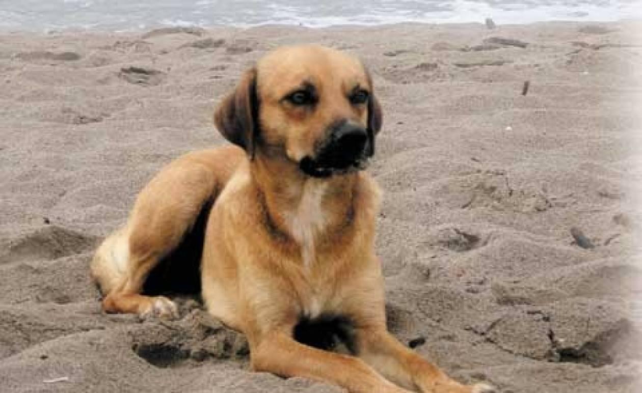 Μαθήματα.. ανθρωπιάς από ένα σκυλί