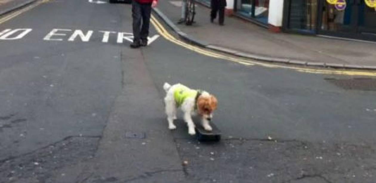 Σκύλος κάνει skateboard!