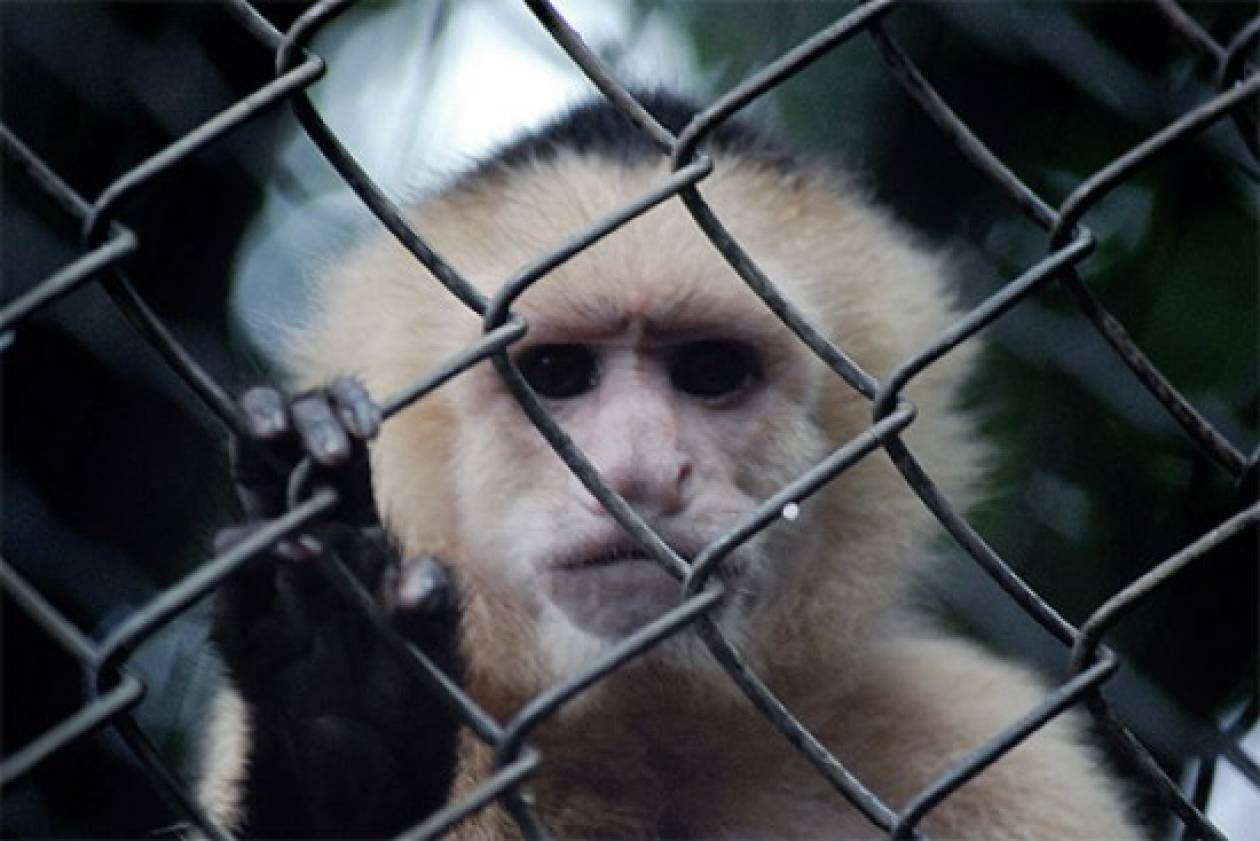 Πέθαναν από το κρύο 35 ζώα στο Μεξικό