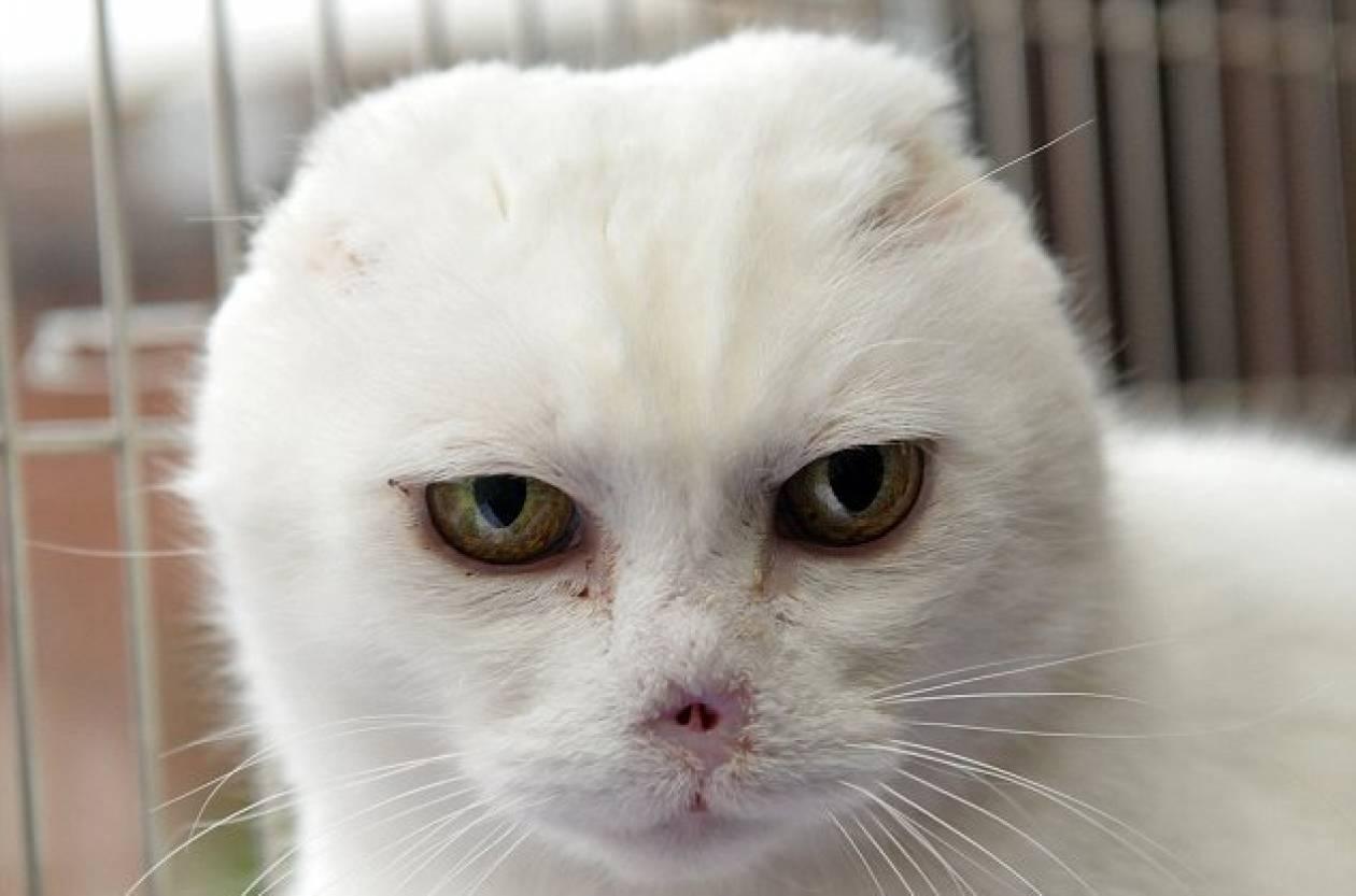 Γάτα μοιάζει στον εχθρό του Harry Potter!
