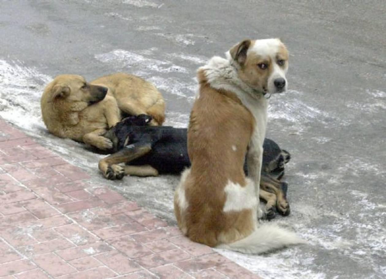 Σκότωσε πέντε σκύλους εξαιτίας μιας κότας!