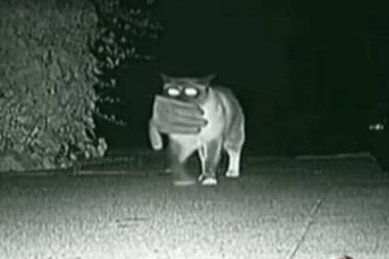Γάτος…κλεπτομανής