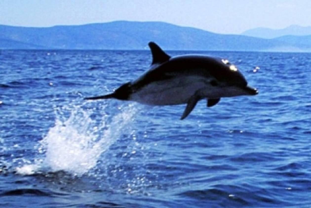 """Κορινθιακός: """"Νεκροταφείο"""" δελφινιών"""