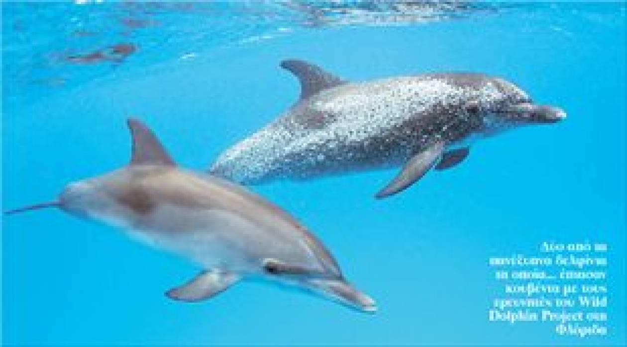 Άνθρωποι και δελφίνια στο μπλα-μπλα