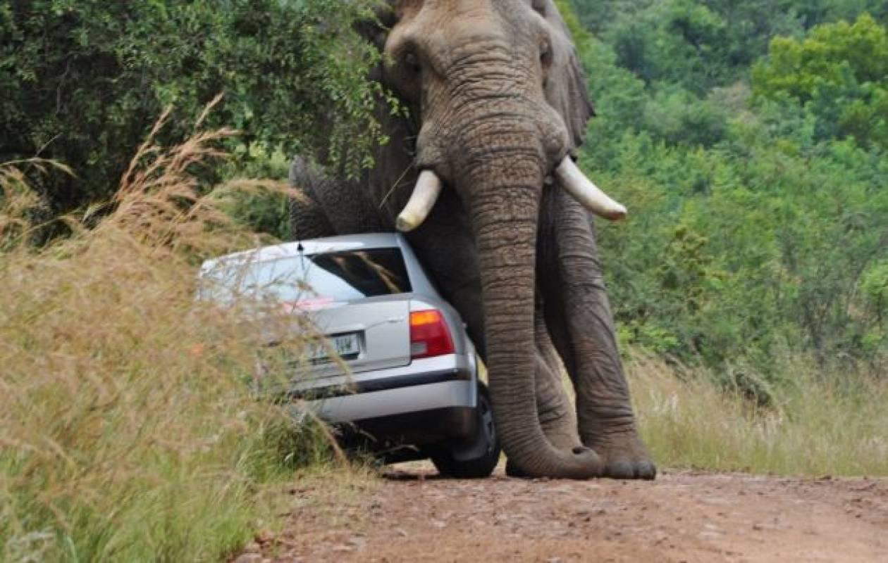 Ελέφαντας παίζει… με αυτοκίνητο!