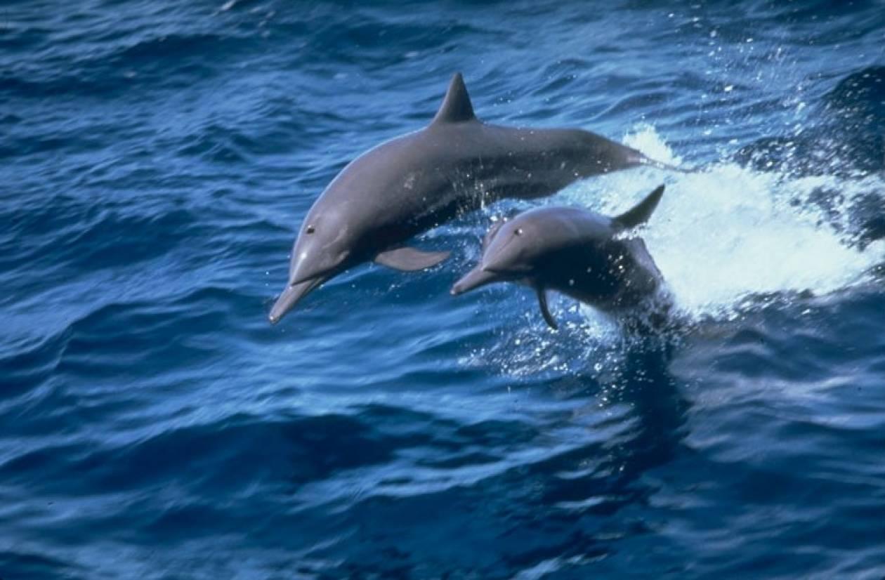 Πεθαίνουν τα δελφίνια στον Κόλπο του Μεξικού