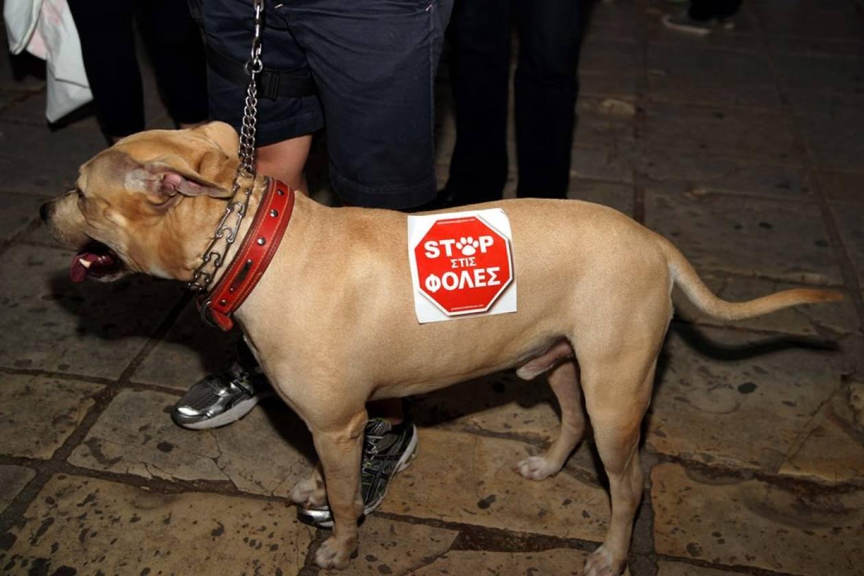 Κρέμασαν σκυλί στη Λέρο!