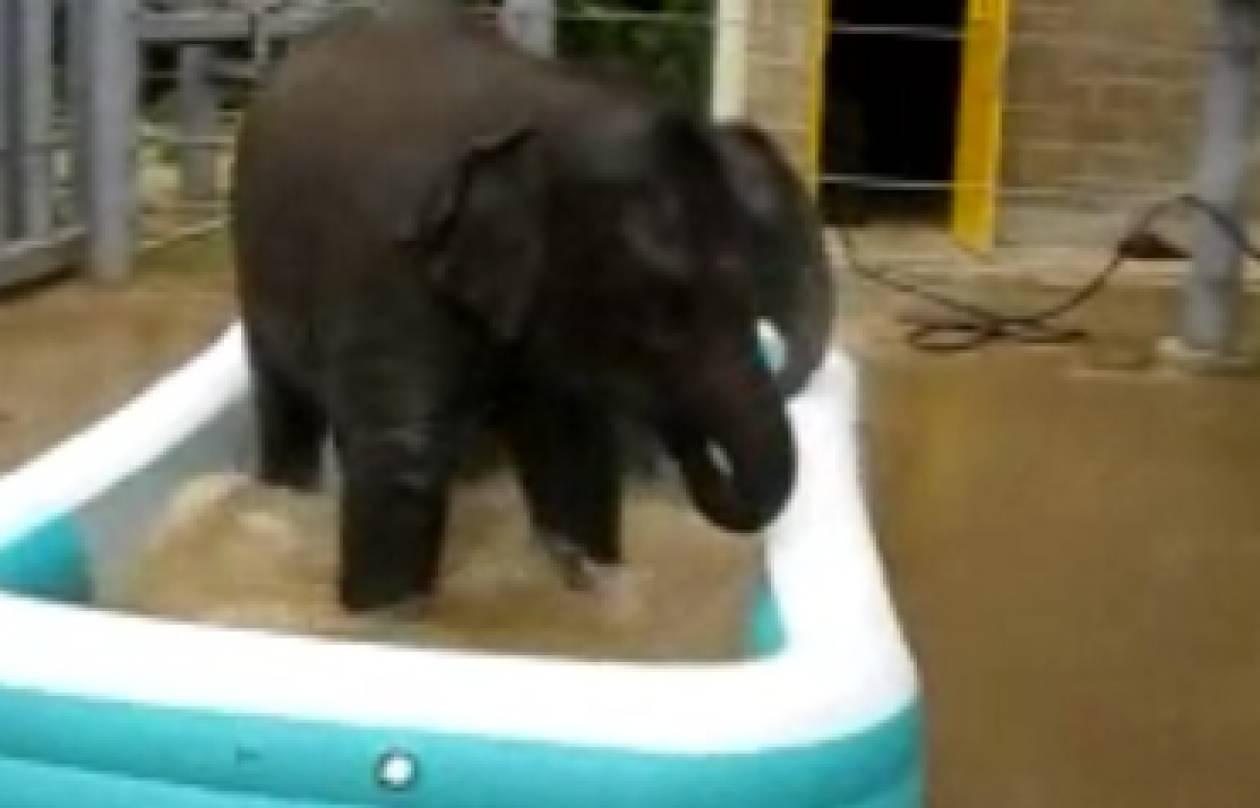 Ελέφαντες σε πισίνα!