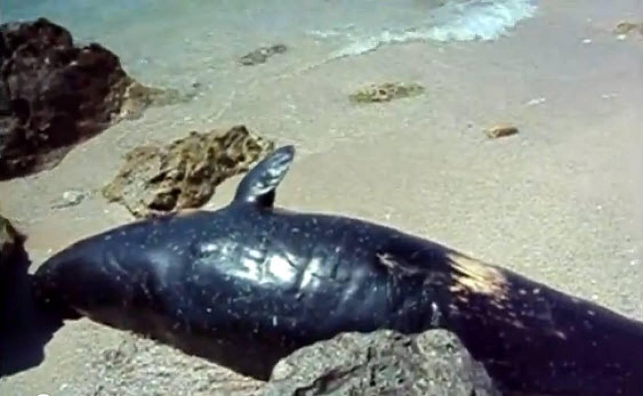Νεκρή φάλαινα εντοπίστηκε στη Λευκάδα