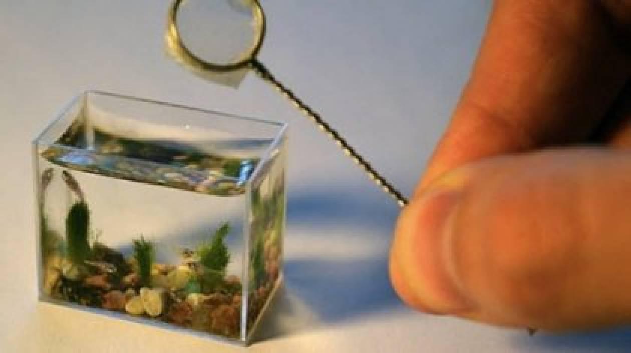 Το πιο μικρό ενυδρείο του κόσμου