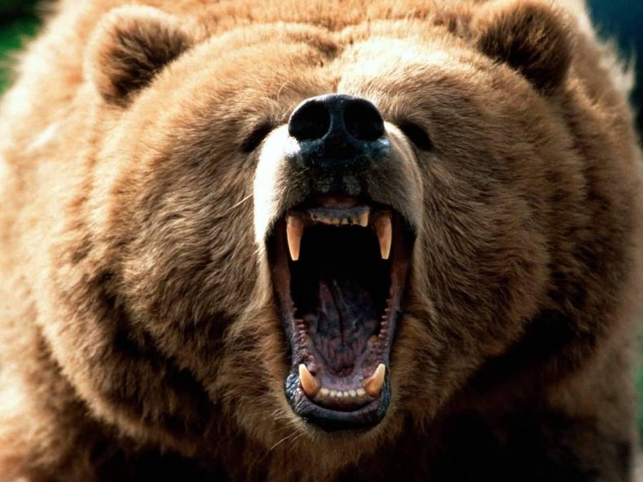Νεκρή αρκούδα στην Άρτα