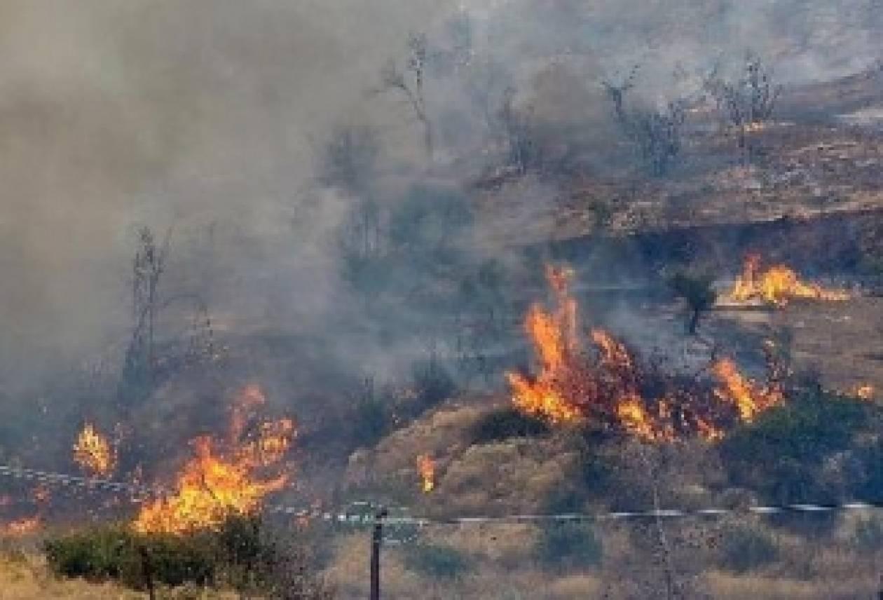 Υπό έλεγχο η φωτιά στη Μεσσηνία