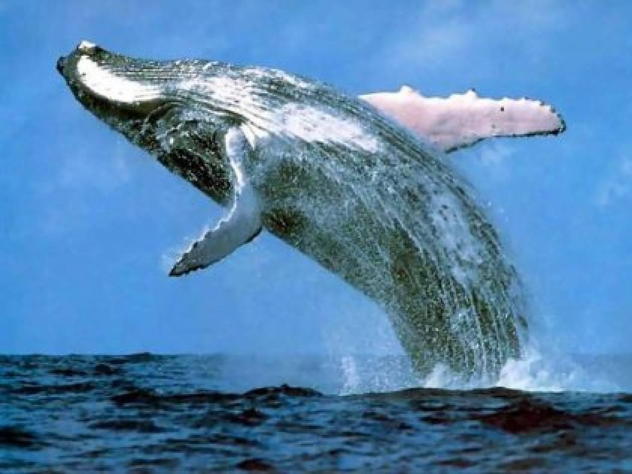 H επιστροφή της φάλαινας