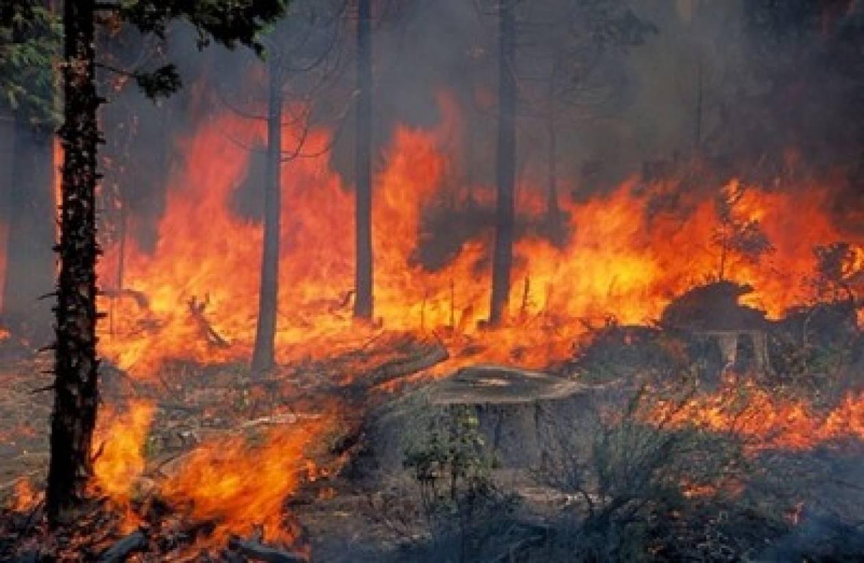Δελτίο πυρκαγιών