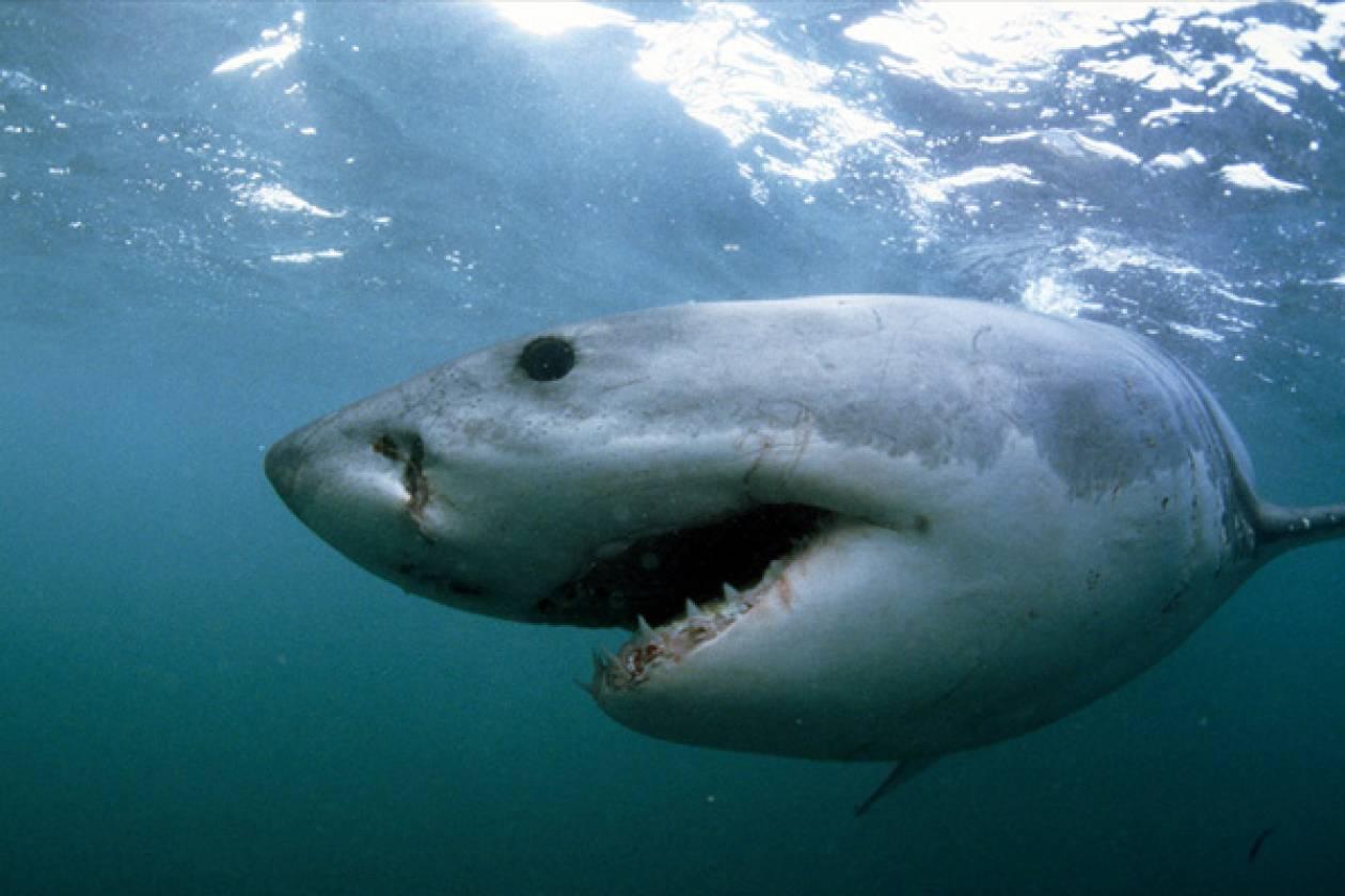 Κέιπ Τάουν: Καρχαρίας επιτέθηκε σε 42χρονο