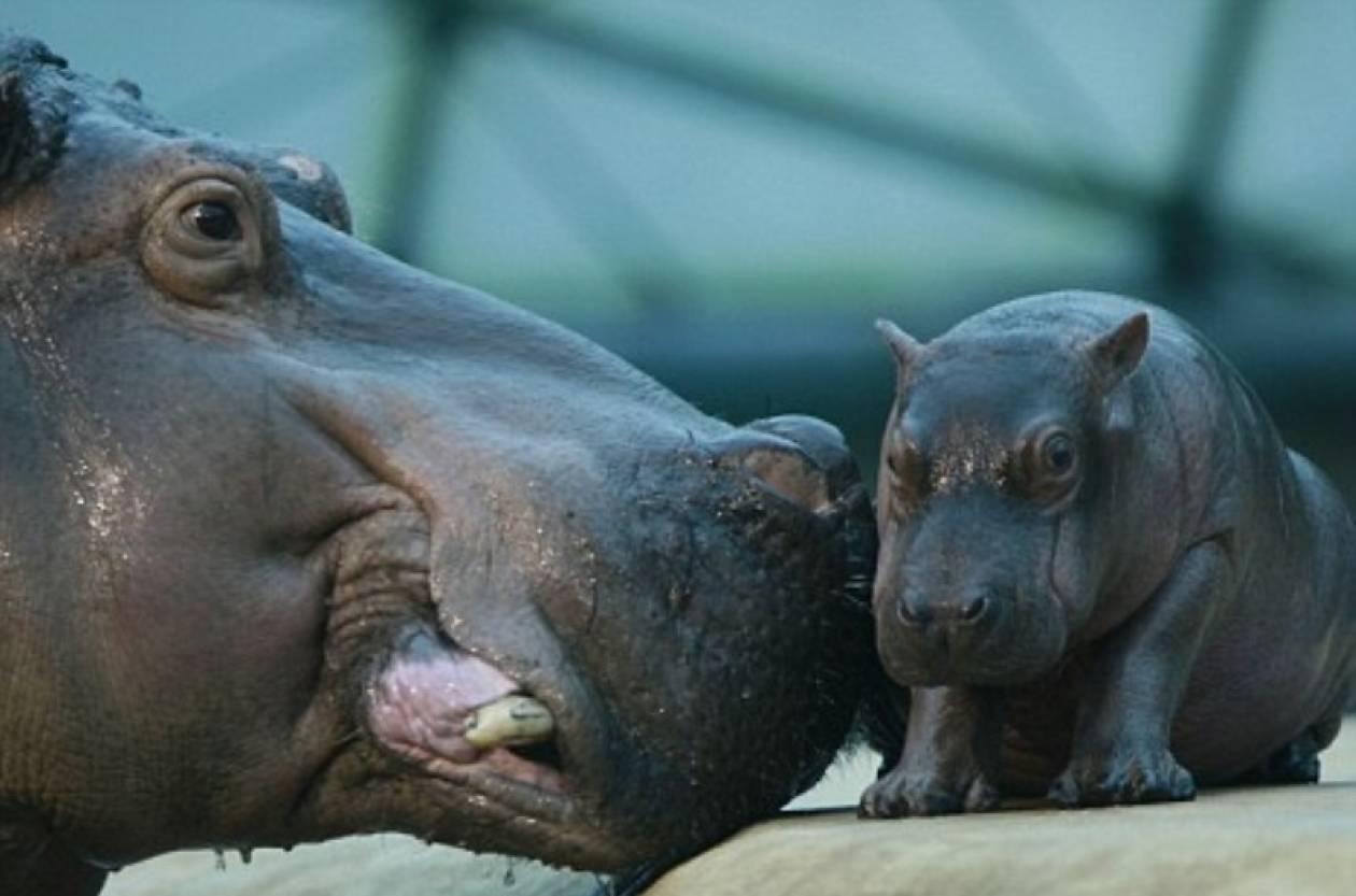Νέος σταρ στο ζωολογικό κήπο του Βερολίνου