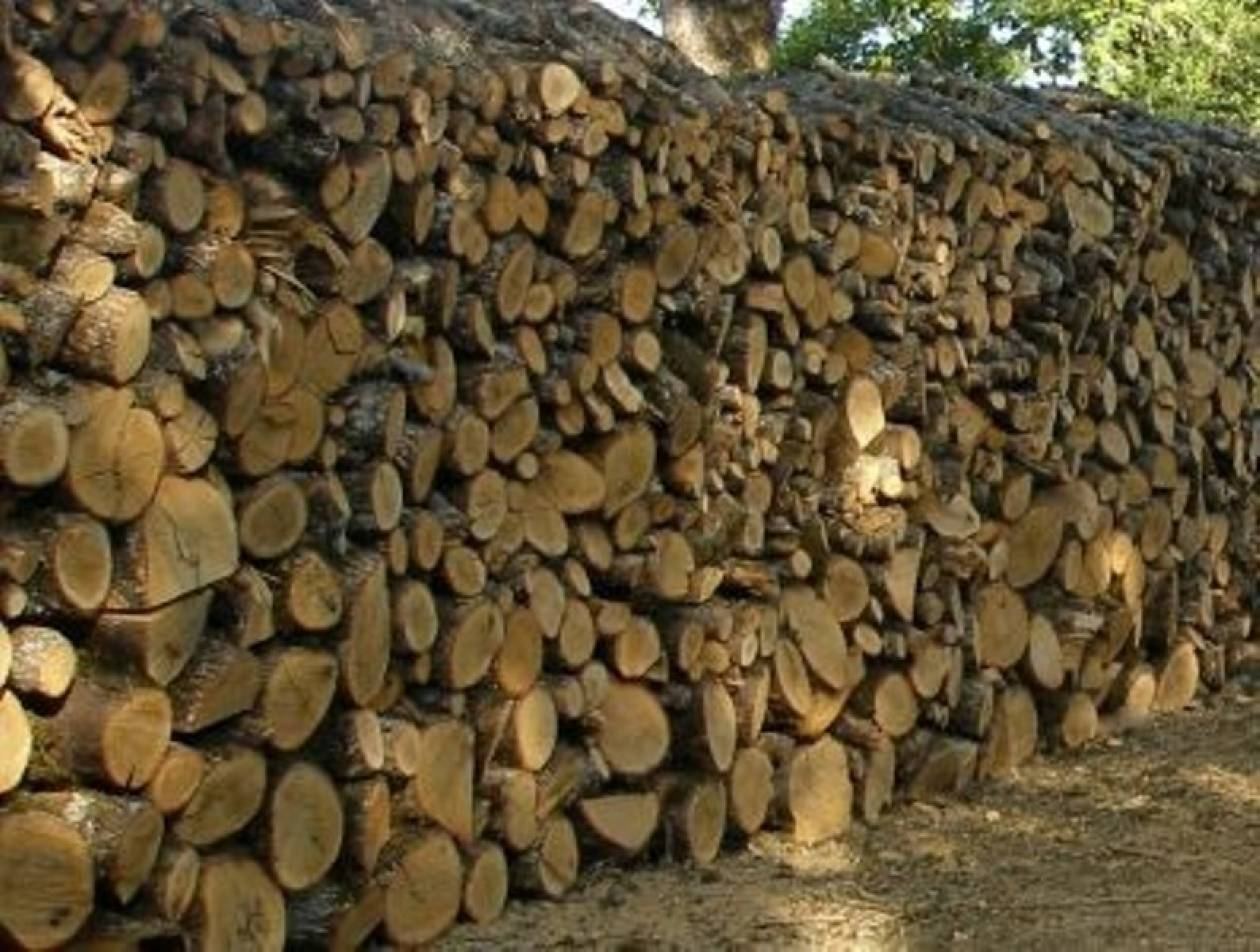 Τους έπιασαν για κλοπή 3,5 τόνων ξύλων