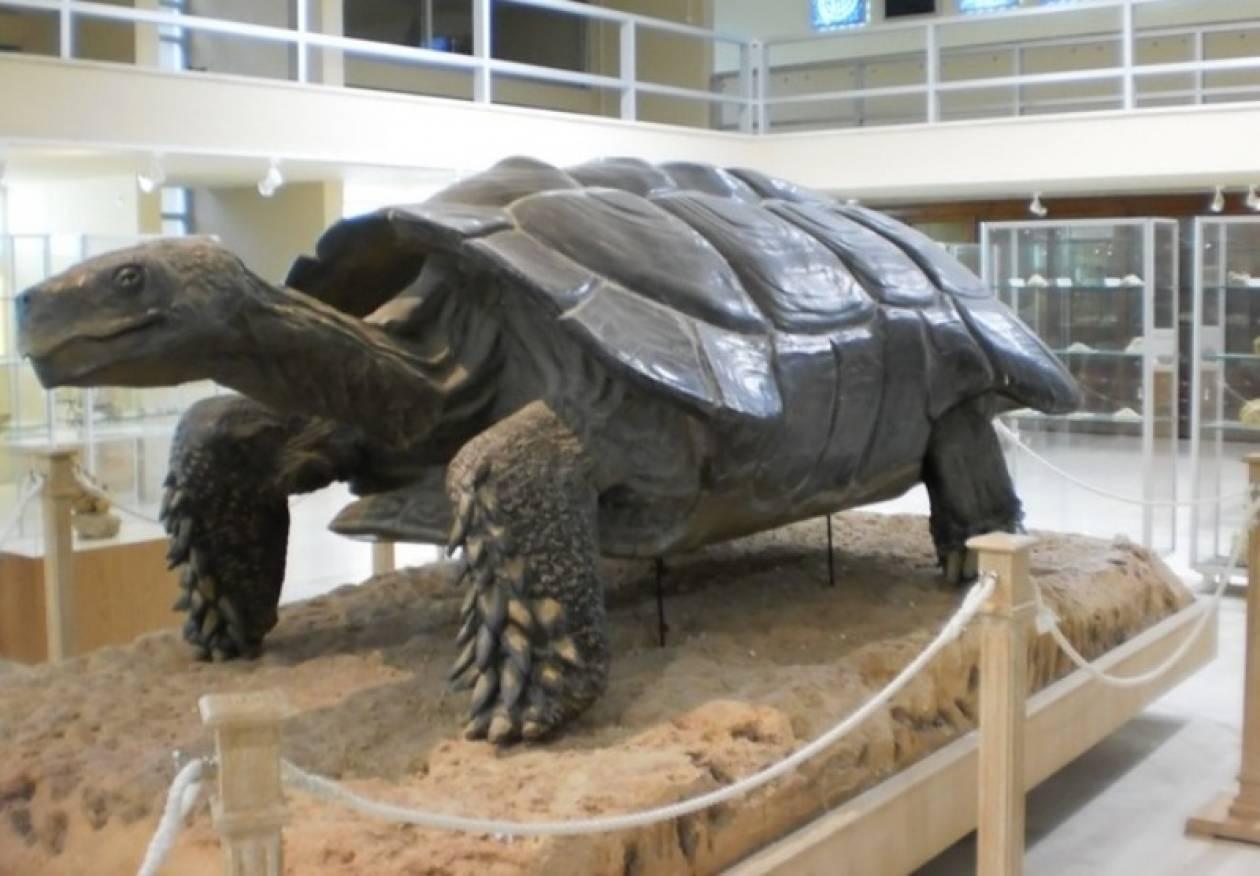 Ανοιχτό τις Κυριακές το Μουσείο Παλαιοντολογίας