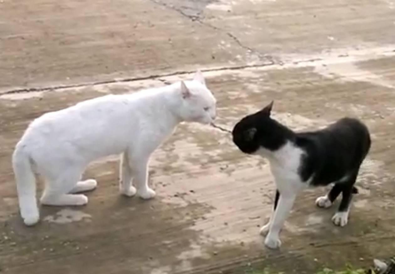 H γάτα...κόμπρα
