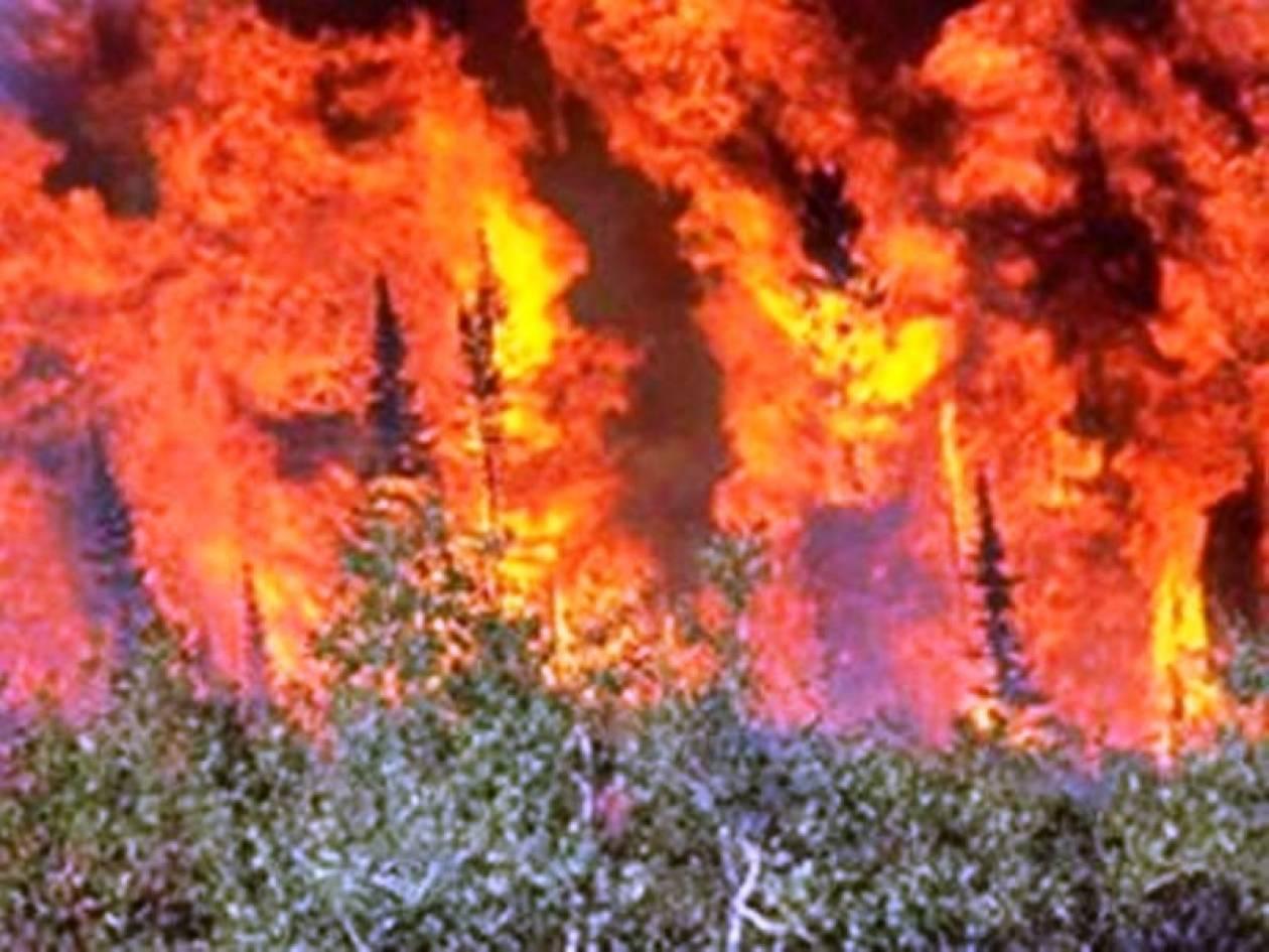 Σε εξέλιξη φωτιά στη Ναύπακτο