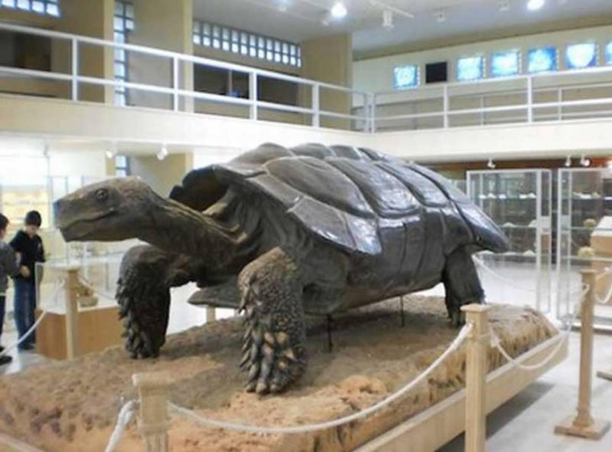 Ελληνικό Μουσείο Παλαιοντολογίας