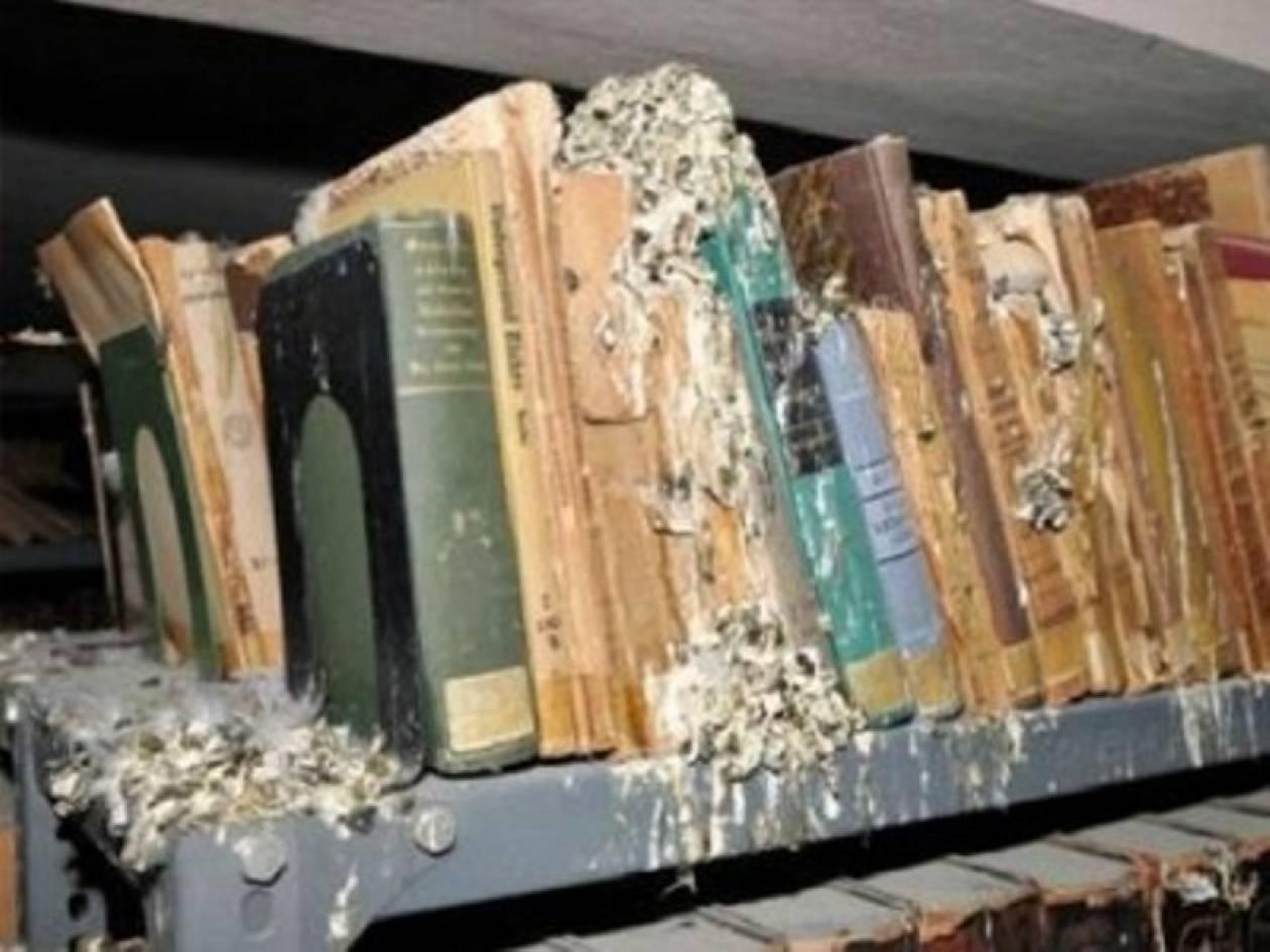 Περιστέρια κατέστρεψαν σπάνια βιβλία
