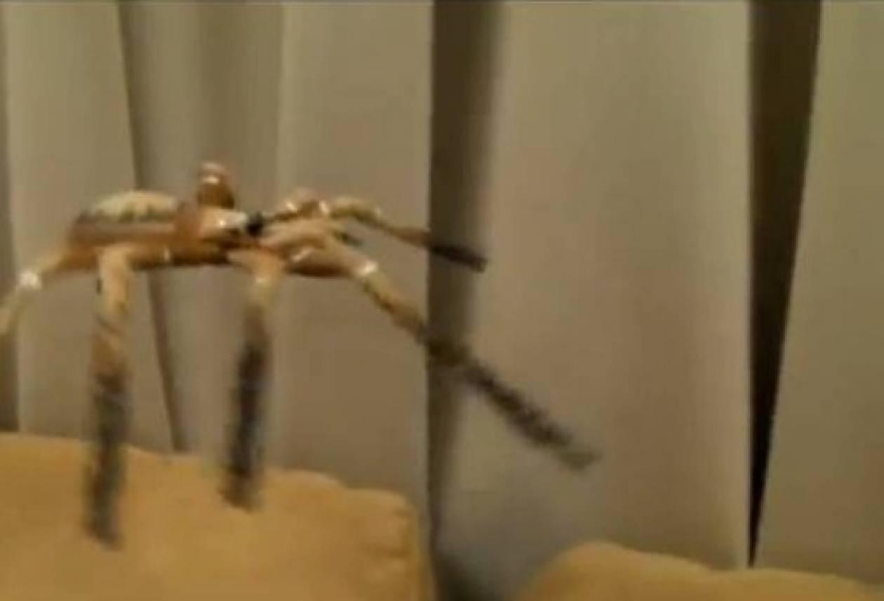 Η καλύτερη πλάκα με αράχνη