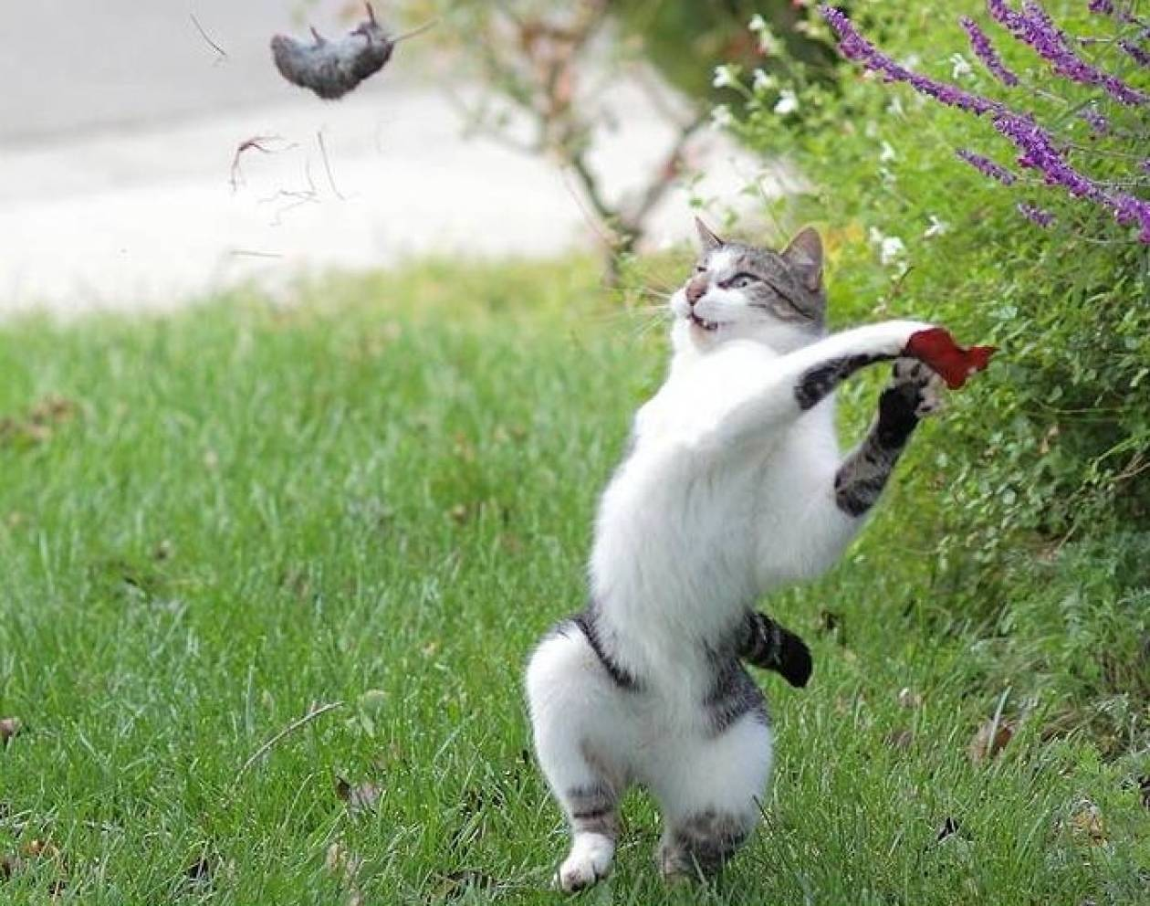 Ο γάτος που παίζει μπέιζμπολ με ένα…ποντίκι