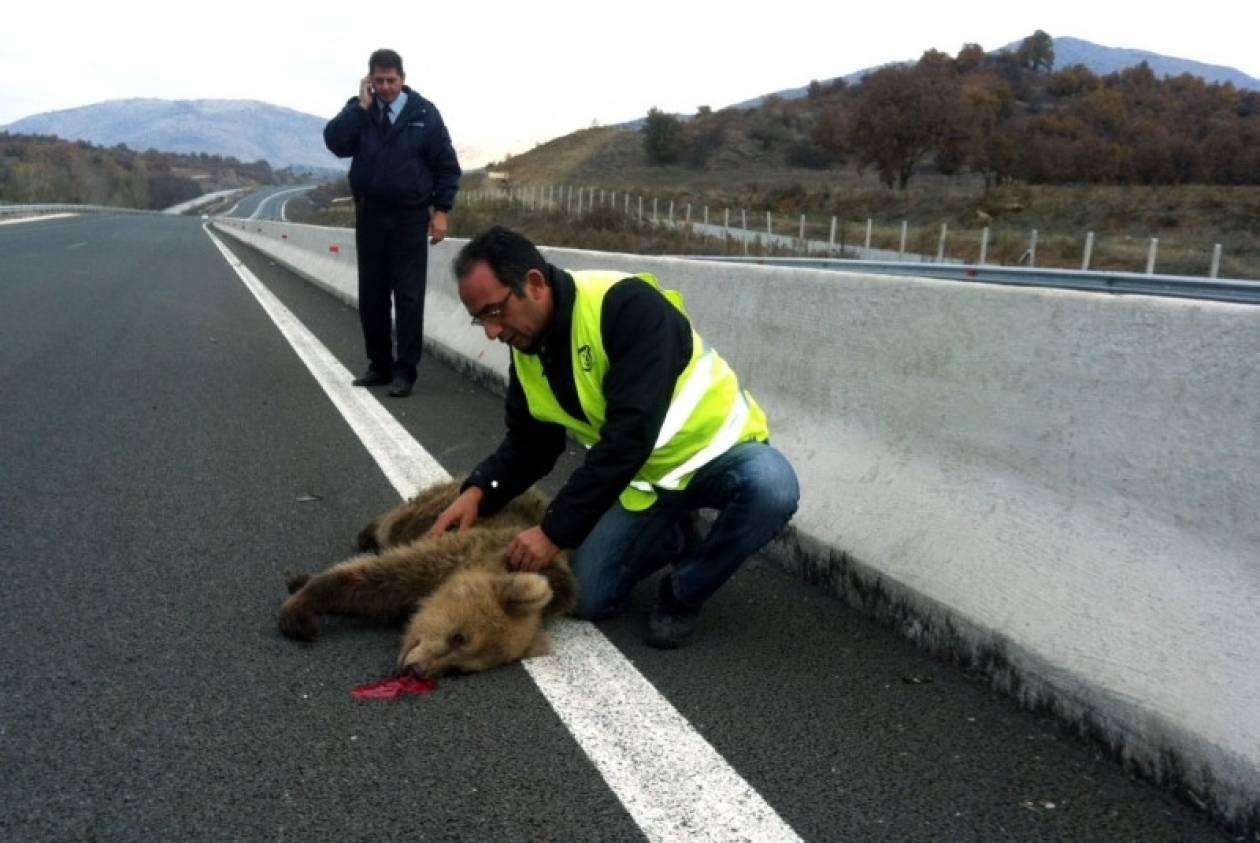 Τροχαίο με θύμα μια αρκούδα στην Εγνατία Οδό