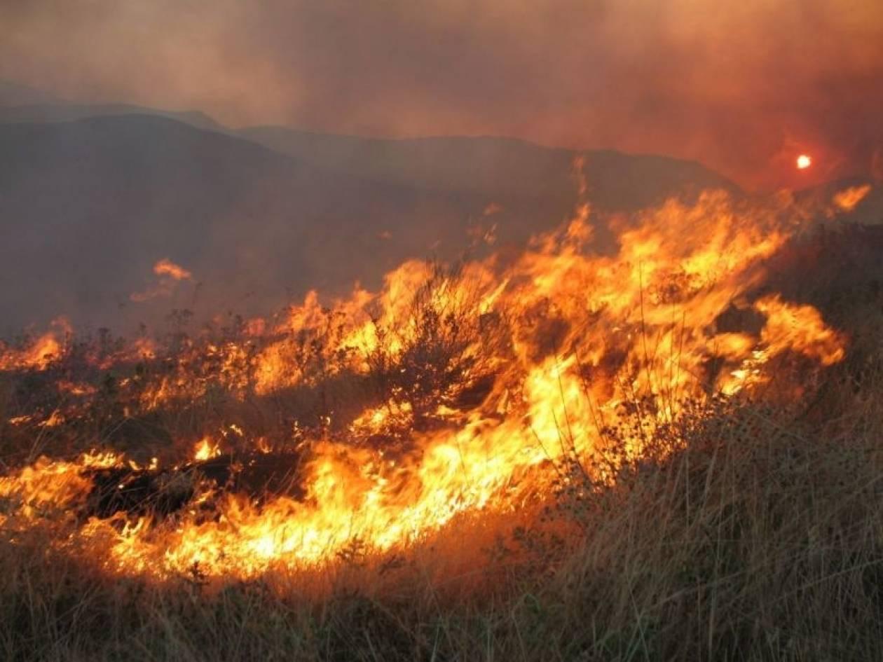 Πυρκαγιά στο Παχτούρι Τρικάλων