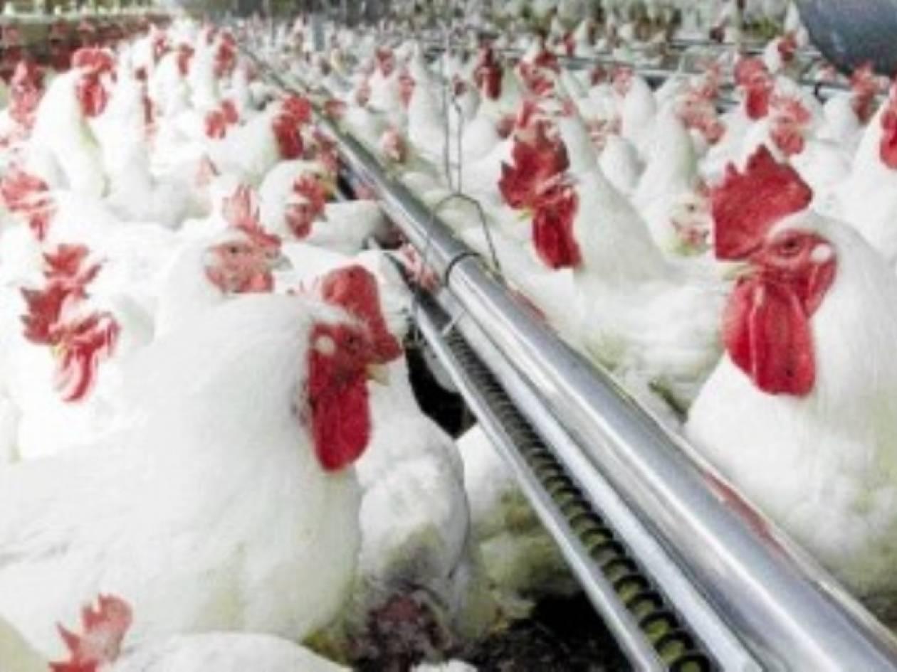 «Χτύπησαν» εταιρεία πουλερικών στις Αχαρνές