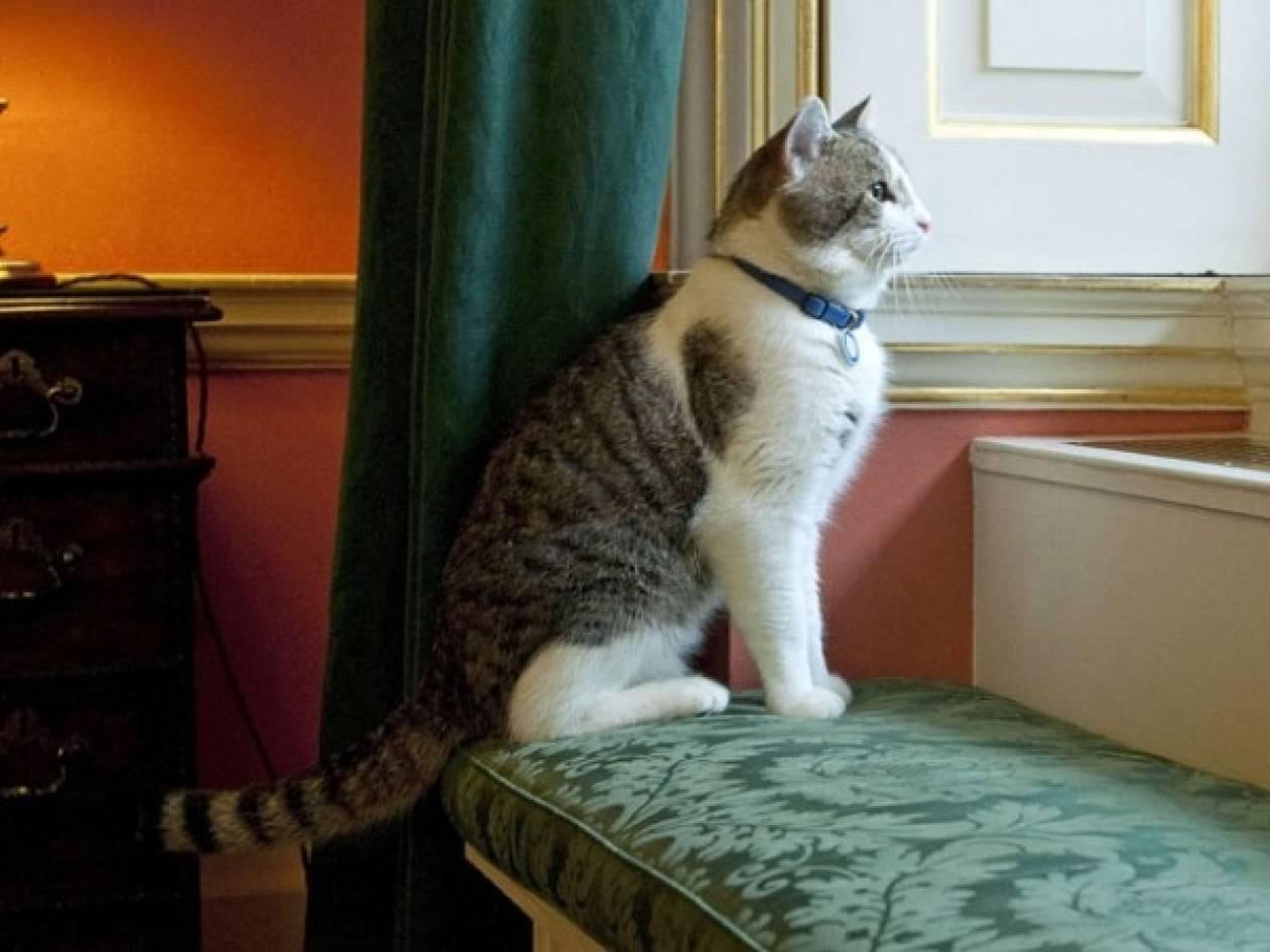 Στήριξη της βρετανικής κυβέρνησης στον Λάρι τον γάτο