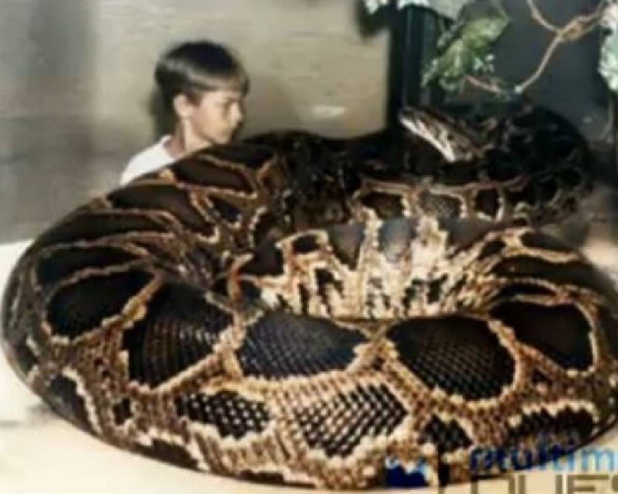 Τα μεγαλύτερα φίδια με τα περισσότερα views στο YouTube