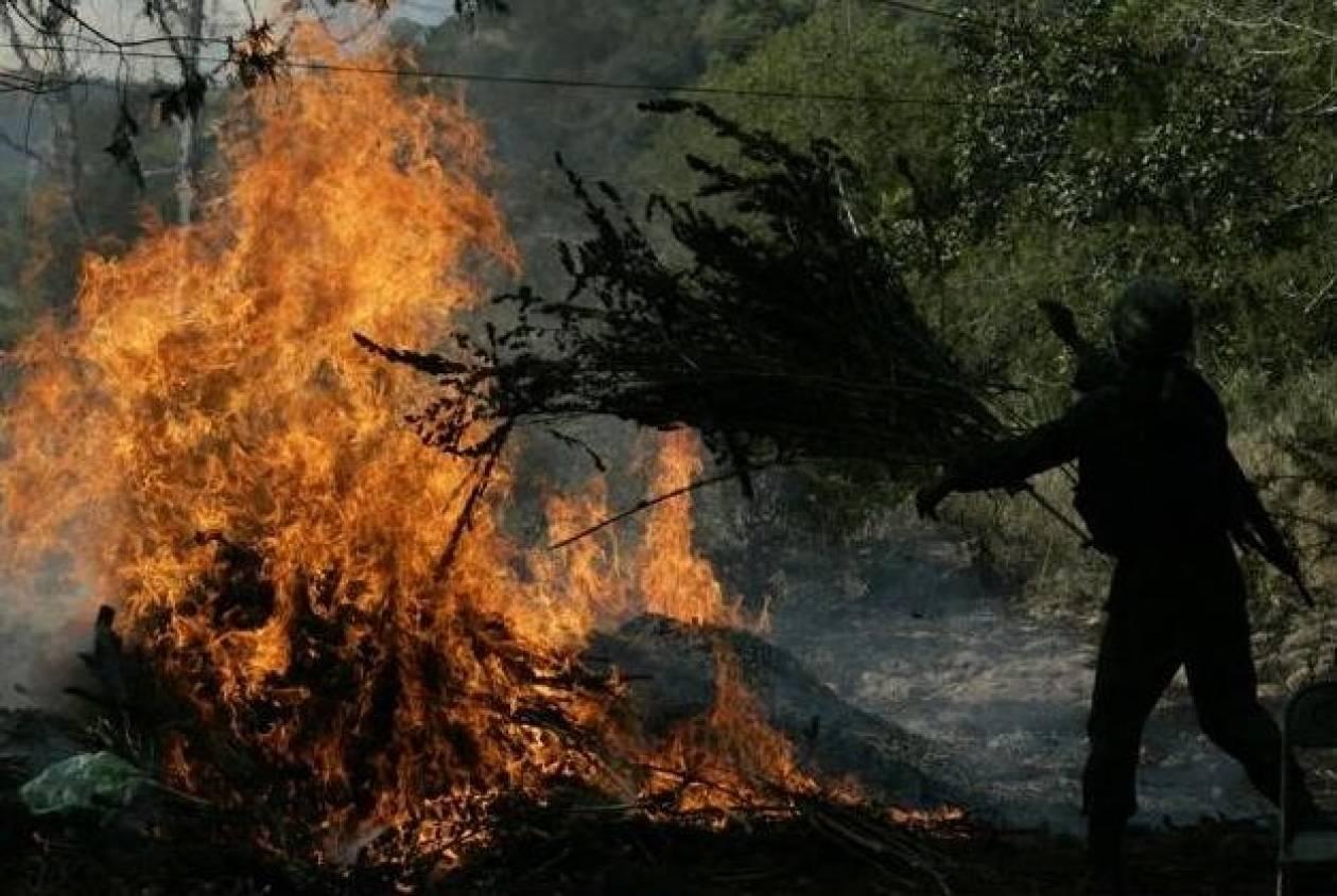 Μαριχουάνα στοπ στο… Μεξικό