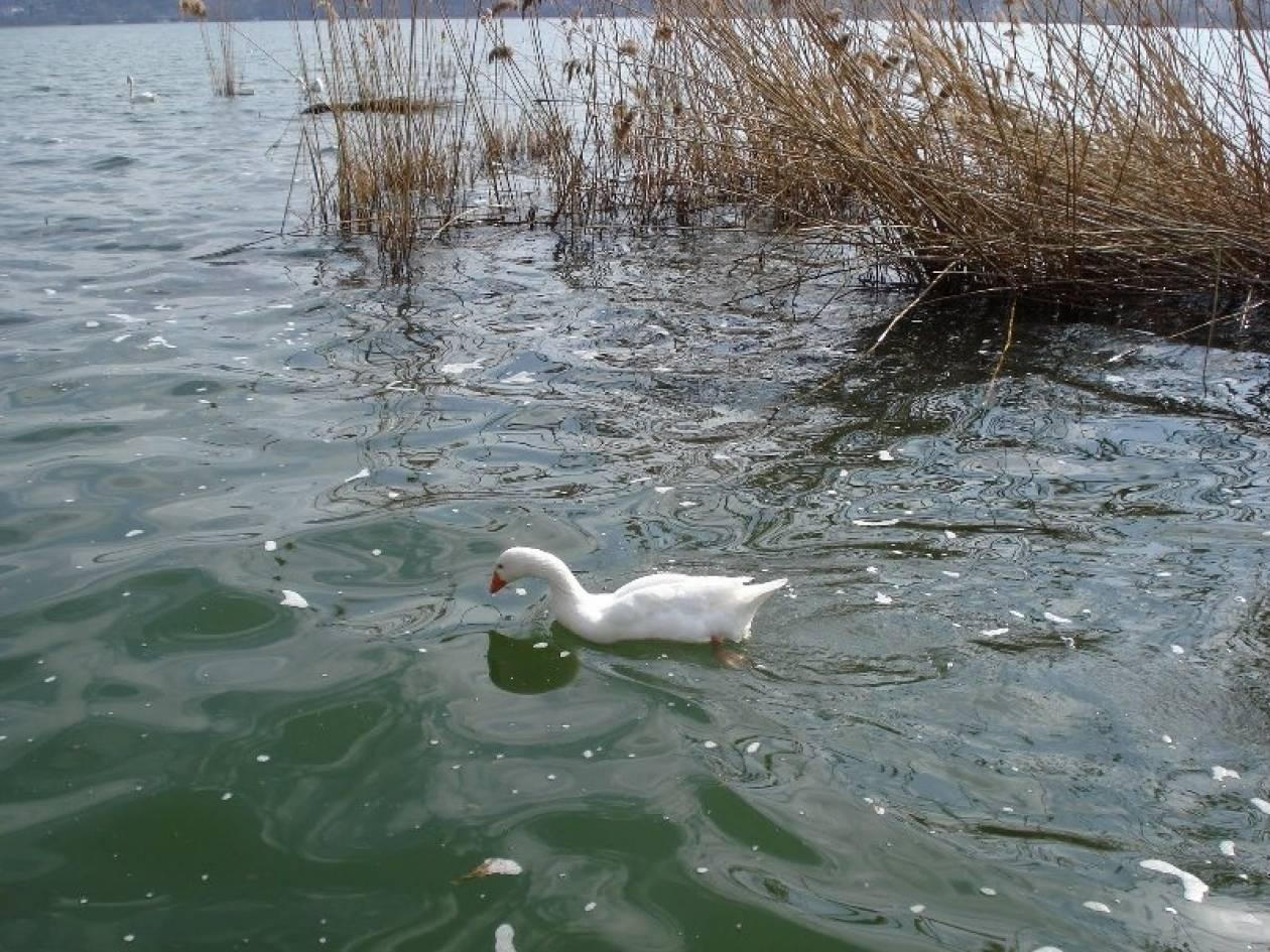 ΣΟΚ! Μόλυνση στα νερά της Ν. Θεσσαλίας από ψεκαστικά μηχανήματα