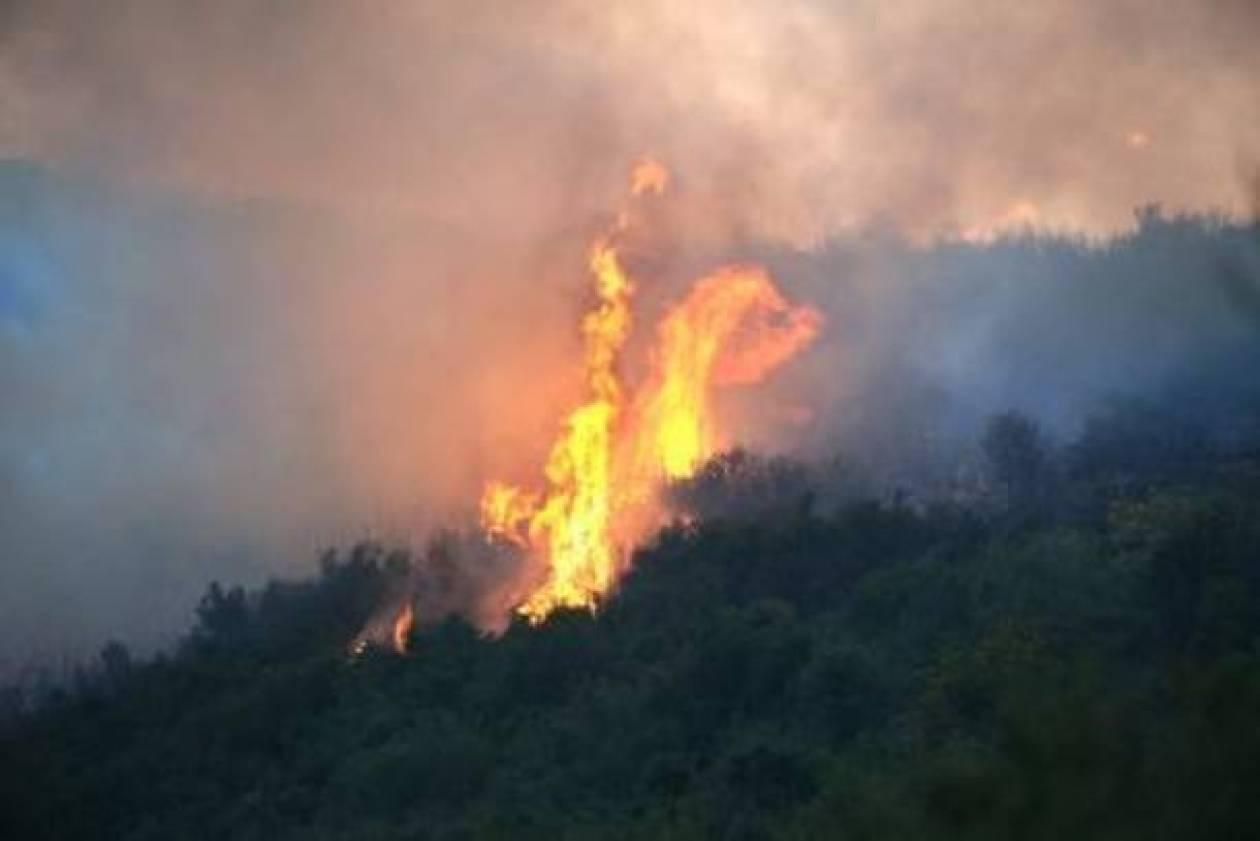 Κάηκε δάσος στην Αμαλιάδα