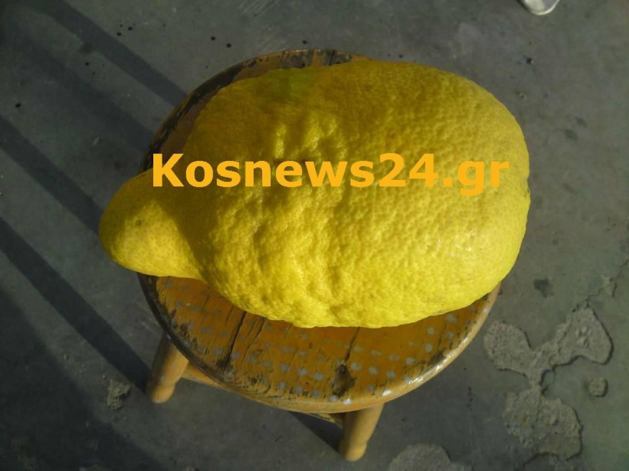 Λεμόνι 2,5 κιλών