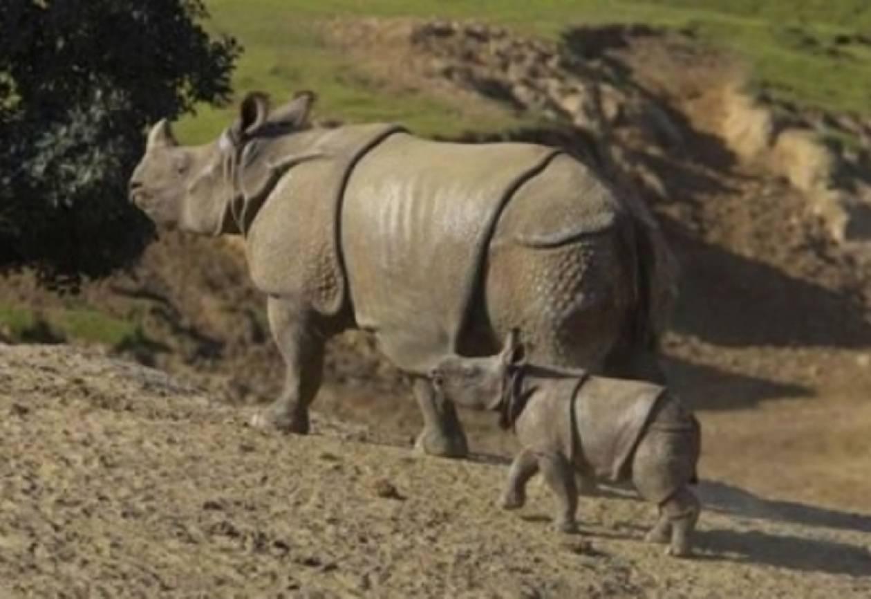 Δήλωση πολιτικού σκότωσε τον τελευταίο ρινόκερο